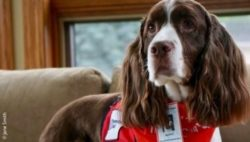Photo: Four-year-old springer spaniel named Murphy; Copyright: Jane Smith