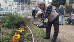 Image: an old man watering some flowers in a park; Copyright: Tohoku University