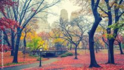 Photo: Central park in NYC on a rainy morning in autumn; Copyright: panthermedia.net/Sergey Borisov