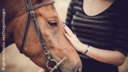Photo: Hand of a girl touches the head of a horse; Copyright: panthermedia.net/DragonImages