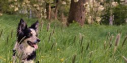 Photo: Assistance dog Ette sitting on meadow