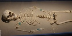 Image: Skeleton; Copyright: beta-web/Dindas