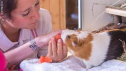 Photo: A woman with a guinea pig; Copyright: REHAB Basel
