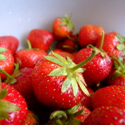 Photo: Lots of strawberries