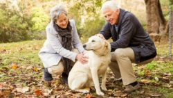 Photo: An elderly couple petting their dog outdoors; Copyright: PantherMedia/Wavebreakmedia ltd