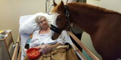 Photo: Pony 13 standing next to the bed of a guest who holds a bowl with sliced carrots in his hands; Copyright: Diakonie-Hospiz Wannsee