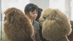 Photo: Girl standing in a group of alpacas and looking at one of them; Copyright: panthermedia.net/anurak ponapatimet