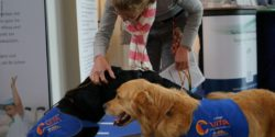 Image: A woman is petting a black and a golden assistance dog; Copyright: beta-web/Lormis